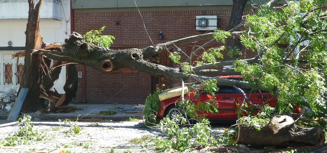 Fallen Tree on a Red Car